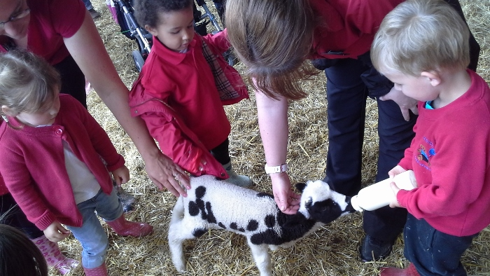 feding the lambs at the mohair centre