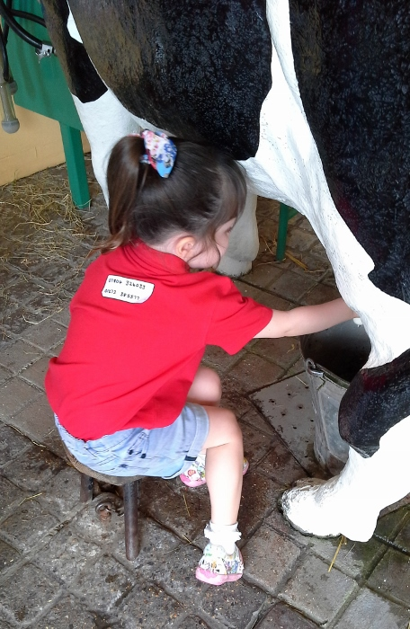 milking the cows at drusillas